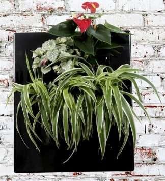 Biovertigo il quadro vegetale per interni e terrazze