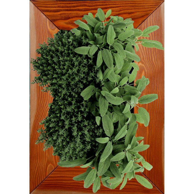 Create a mini vegetable garden at home